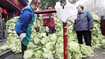 南方人不懂系列 白菜要买100斤